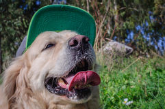 Dog in the cap Royalty Free Stock Photos