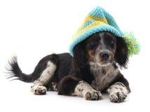 Dog in cap. Stock Photos
