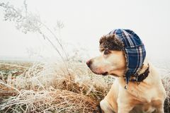 Dog with cap in winter Stock Images