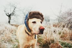 Dog with cap in winter Royalty Free Stock Images