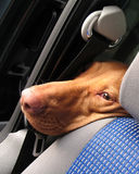 Dog in a car Royalty Free Stock Photography