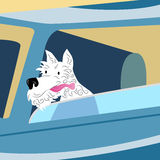 Dog Car Ride Stock Images