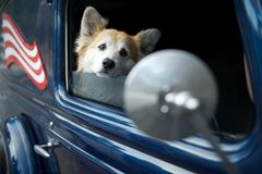 Dog in car with US flag and mirror royalty free stock photo