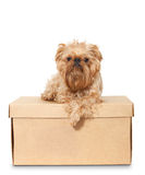 Dog on Cardboard Box Stock Photo