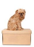 Dog on Cardboard Box Stock Photography