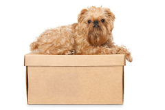Dog on Cardboard Box Stock Photos