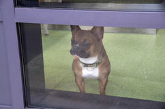 Dog care center Royalty Free Stock Image