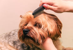 Dog care, close-up Royalty Free Stock Photography