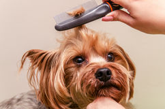 Dog care, close-up Royalty Free Stock Image