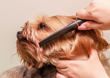 Dog care, close-up Royalty Free Stock Photo
