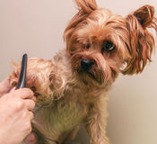 Dog care, close-up Royalty Free Stock Images