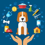 Dog care infographic royalty free illustration