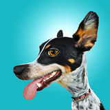 Dog Caricature Royalty Free Stock Images