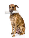Dog carrying newspaper. isolated on white background Royalty Free Stock Photography