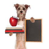 Dog Carrying School Books and Apple Royalty Free Stock Photos