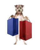 Dog Carrying Shopping Bags. Cute dog standing up and carrying two large shopping or gift bags stock photo