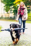 Dog carrying umbrella of his mom in autumn walk. As it stopped to rain Royalty Free Stock Photo