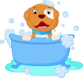 Dog cartoon bath Stock Images