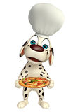 Dog cartoon characte with chef hat and pizza Stock Images