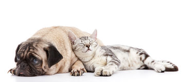 Dog and cat. Cat taking a nap leaning to the dog royalty free stock photography