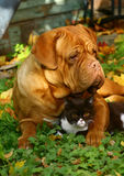 Dog and cat. Big dog and small kitten against autumn foliage Stock Photo