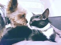 Dog&cat 免版税库存照片