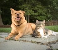 Dog and cat. In the backyard Stock Images