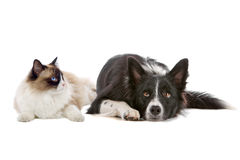 Dog and cat Royalty Free Stock Photos