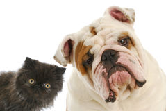 Dog and cat Royalty Free Stock Image