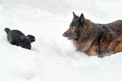 Dog and cat. Playing in the snow Royalty Free Stock Photo