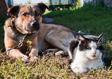 Dog And Cat. Together be at rest Royalty Free Stock Photos