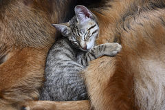 Dog and a cat. Royalty Free Stock Photography