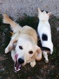 Dog&cat Arkivfoto