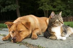 Dog and Cat. (Hey wake up, we have company Stock Photos