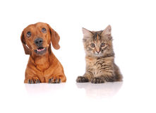 Dog and Cat above white banner stock images