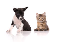Dog and Cat. Above white banner looking at camera Stock Image