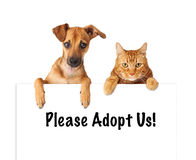 Dog and Cat Adopt Us Royalty Free Stock Images