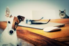Dog, Cat, Animals, Friend, Animal Stock Photography