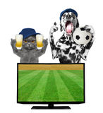 Dog and cat with ball and beer fan football championship Royalty Free Stock Photography