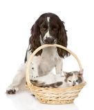 Dog and cat in basket Royalty Free Stock Photos