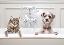 Dog and Cat in Bathtub Together Stock Photos