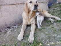 Dog and cat best friends. They live in the church Stock Photos