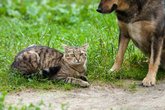 Dog and cat best friends Royalty Free Stock Photos