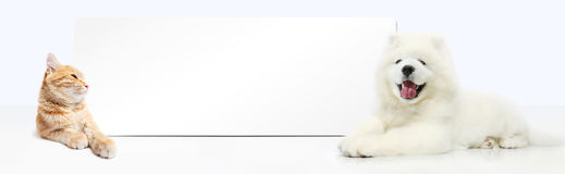 Dog and Cat with blank banner isolated on white background. Panoramic view Royalty Free Stock Image