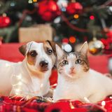 Dog and cat in christmas decoration. Happy new year and merry Christmas royalty free stock image