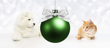 Dog and cat with christmas green ball on white. Background Stock Image