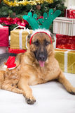 Dog and cat in Christmas night. Two best friends dog and cat in Christmas night Royalty Free Stock Photo