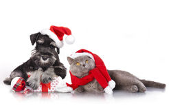Dog and cat Christmas. Dog and cat  wearing a santa hat With Christmas decorations Royalty Free Stock Photography