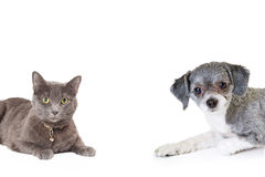 Dog and Cat Coming Into Photo Frame Royalty Free Stock Photos