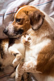 Dog and cat cuddle on bed. A brown dog and cat wake up hugging from a nap stock photos